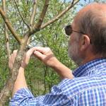 Entretien des arbres au verger conservatoire