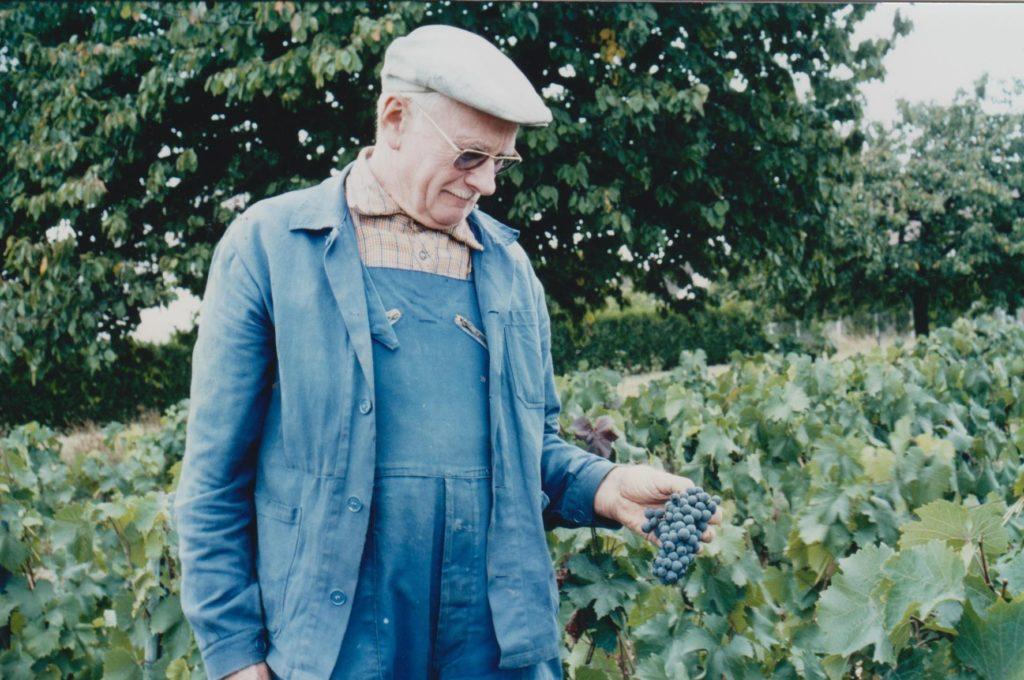 Une grappe de Seibel 5455 appelé « Plantet » présentée par Monsieur Olivier Guignon vers 1990 dans la vigne des Champs-Rémy devenue la Vigne de Fontaine. (Cliché Photo-club de Fontaine)