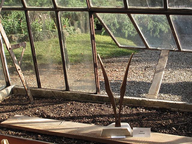 Sculptures d'Henri Cainaud exposées dans une serre.
